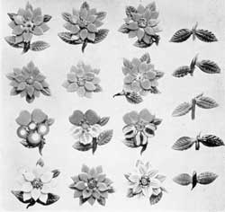 ILLUSTRATION III: Flowers and Leaves for Paperweights: These were all made by Lutz. The six flowers at the top are all red poinsettias. Below them, three flowers characteristic of his work. In the bottom row, other flowers. At the right hand, leaf sprays made by Lutz with a special hand tool.