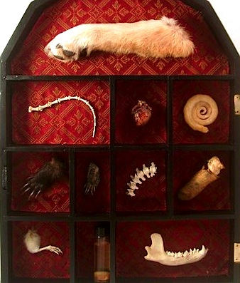 A cabinet of curiosities put together by the Loved to Death store in San Francisco.