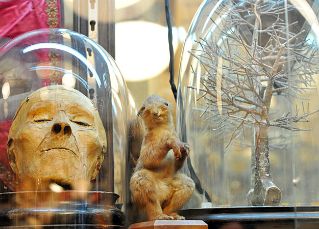 In Obscura, you might find a real mummified human head among the taxidermy and specimen jars. Via the Discovery Channel.