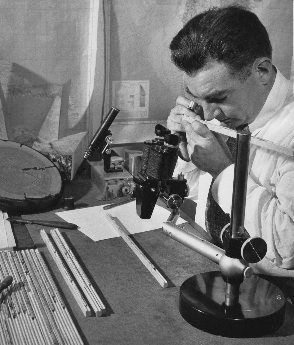 Top: A deceased Great Basin bristlecone pine. Photo by Nick Turland. Above: Dr. Edward Schulman, the first to study bristlecone pines, analyzing a core sample. Courtesy of Laboratory of Tree-Ring Research, The University of Arizona.