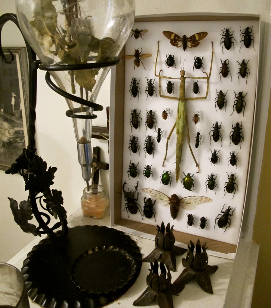Doughty's home is filled with everything from vintage pharmaceutical devices to taxidermied insects.