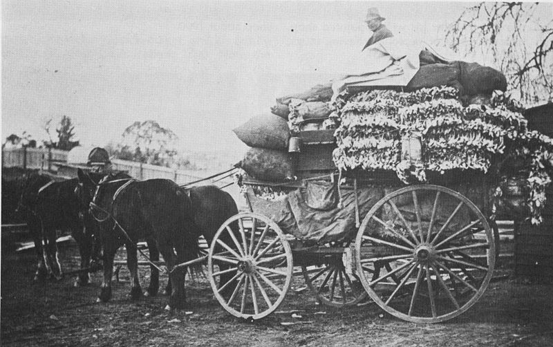 Bert Mann with a load of rabbit skins, Walcha, New South Wales, circa 1905. (Gooreen collection)