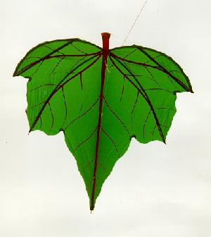Leaf kites, used in Bali for fishing, are believed to be some of the oldest kites, dating back 2,000 years. Via Kiteman.co.uk.