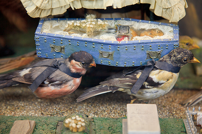 "A detail of Walter Potter's first diorama, ""The Death and Burial of Cock Robin,"" circa 1861. (Photo by Joanna Ebenstein, via Morbid Anatomy/Blue Rider Press)"