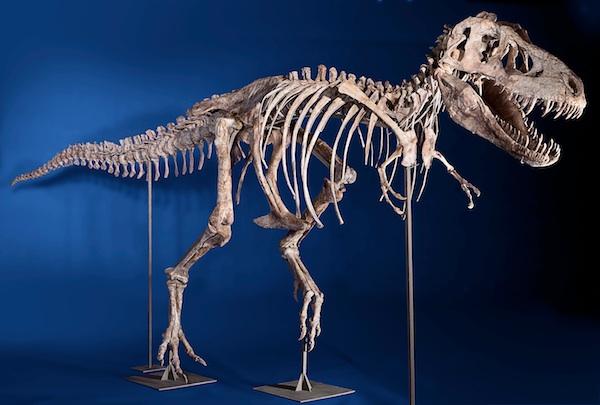 Radiometric dating dinosaur fossils museum