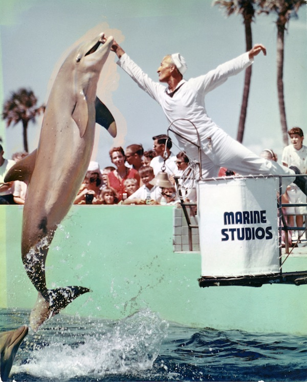a69666e70ceb4c A dolphin leaps for a trainer at Marine Studios in St. Augustine, Florida,